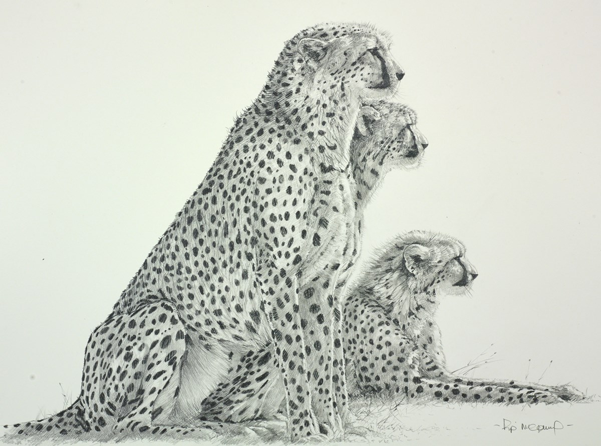 Cheetahs Sketch by pip mcgarry -  sized 18x14 inches. Available from Whitewall Galleries